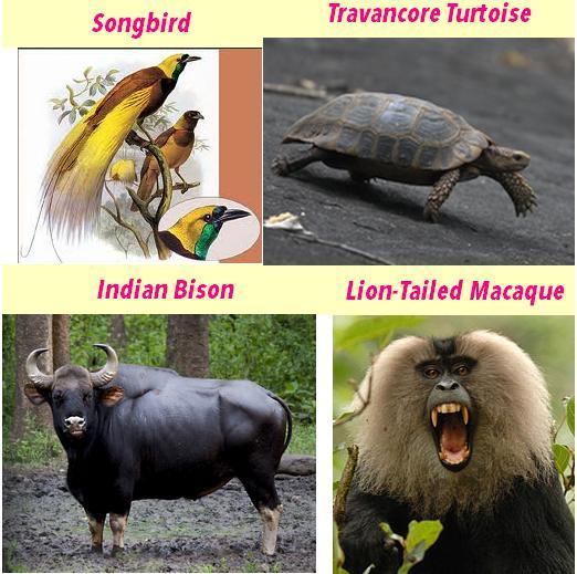 Western Ghats flora fauna