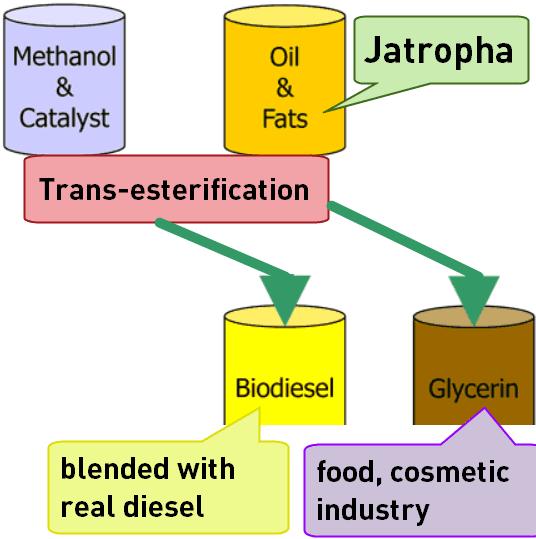Biodiesel chemical process formula