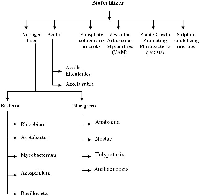 Biofertilizers classification