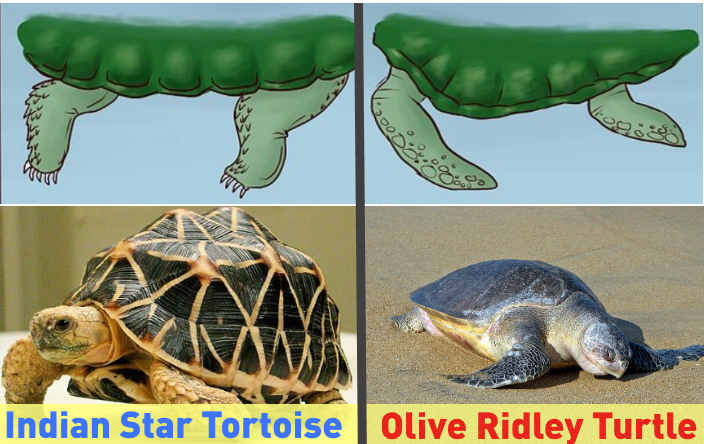 Difference Turtle vs Tortoise