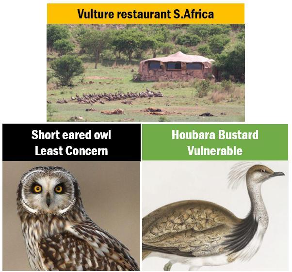 EnB-vulture resturant
