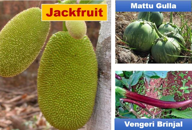 Enb-jackfruit & Brinjals
