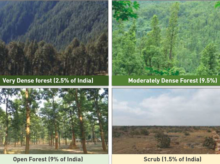 Forest types in India