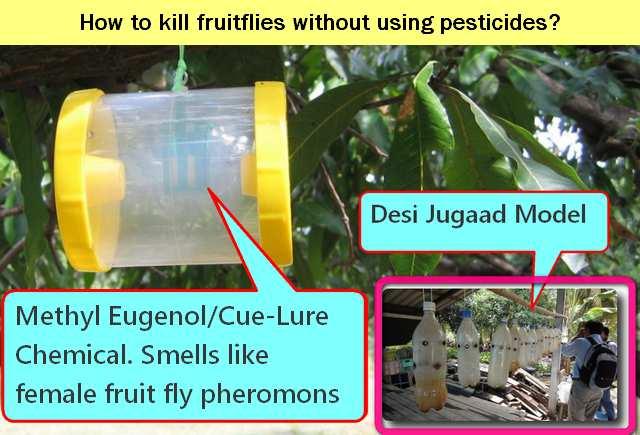 Fruit fly trapper pheromon