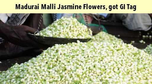 Madurai Malli