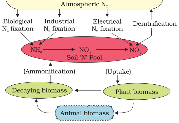 Nitrogen Cycle Agriculture Chemistry
